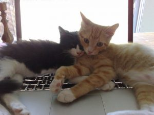Two cats lying on a laptop keyboard